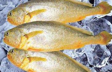 福建宁德:冒用他人商标 4195条大黄鱼被没收,还被罚款48960元