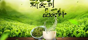 国知局:加大春茶地理标志知识宣传力度