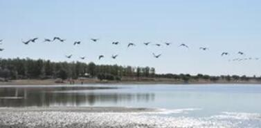 通榆向海大雁——地理标志证明商标